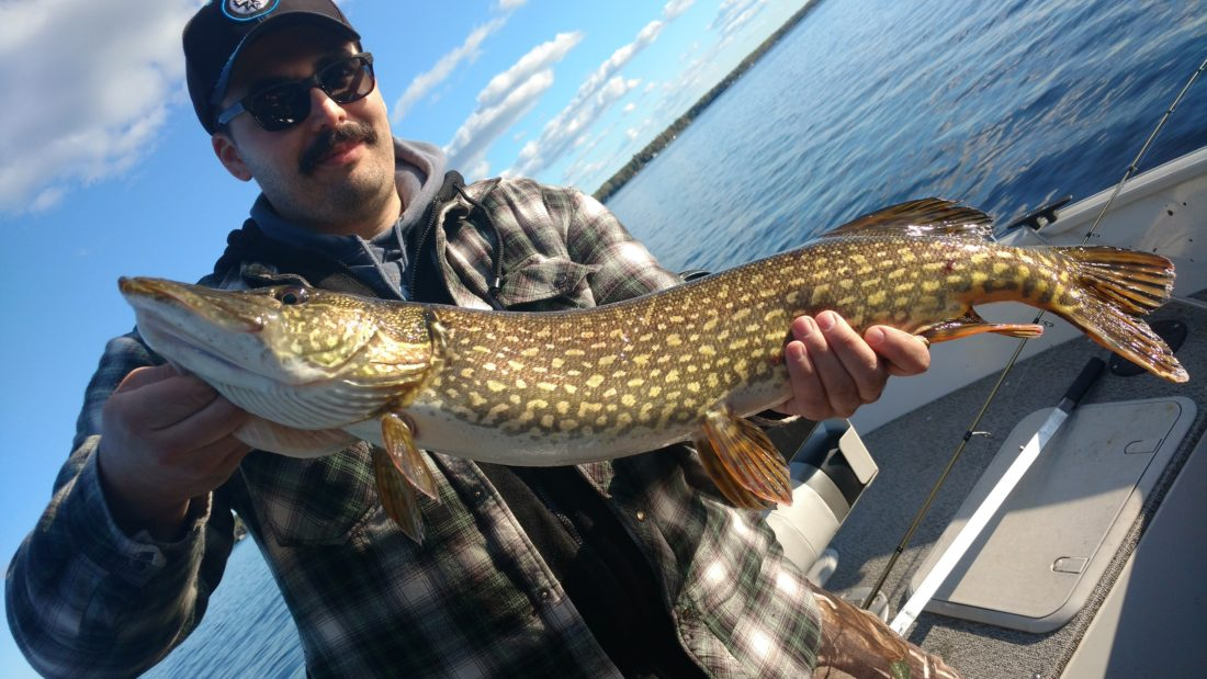 spring pike